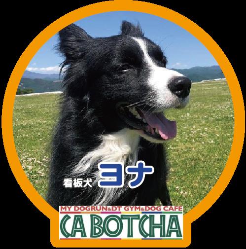 CA BOTCHAの看板犬ヨナのアイコン写真